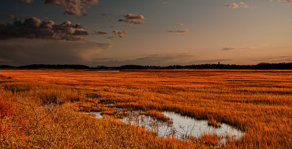 Plum Island field