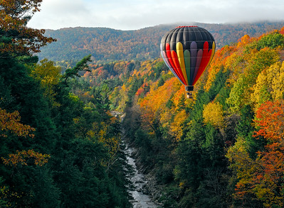 Balloon view of foliage