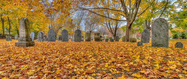 Leaves in cemetery