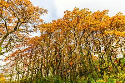 Trees on Plum Island