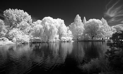 Pond at Mt. Auburn