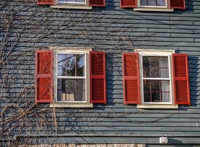 Vines covering windows