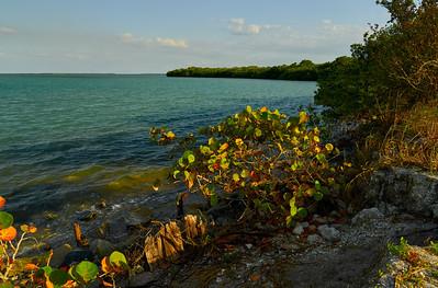 Boca Ciera FL