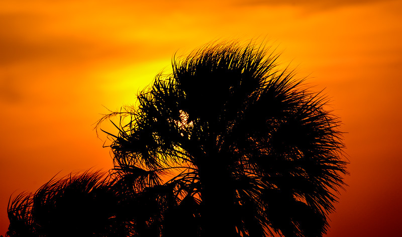 Sun behind palm