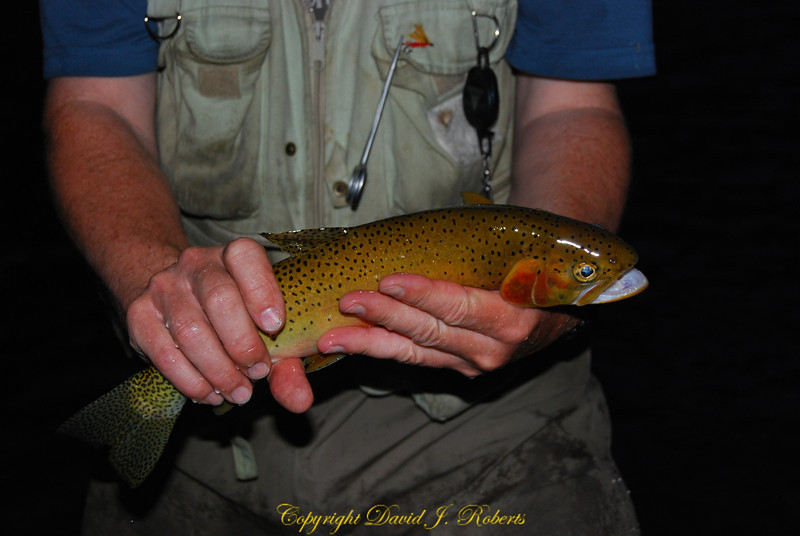 Cutthroat Trout from St Joe River
