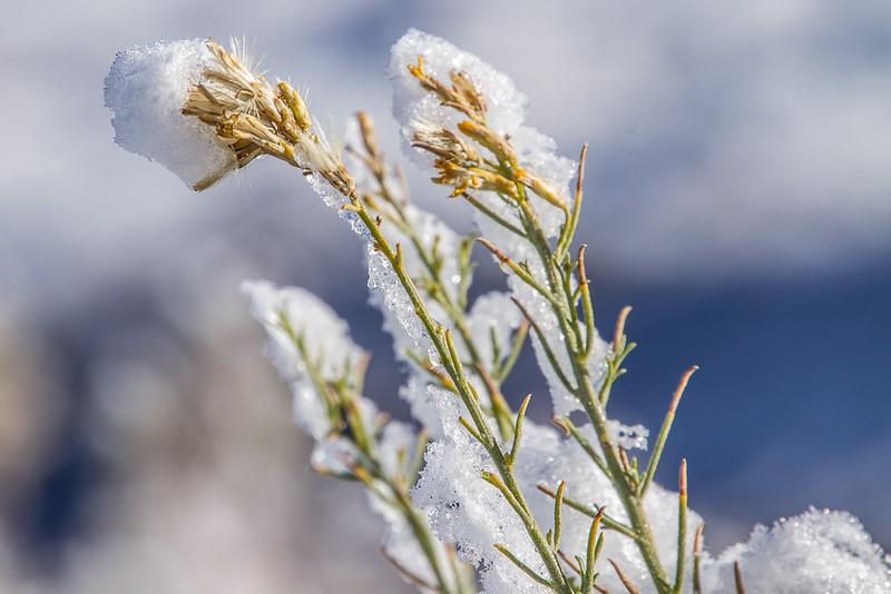 Snow on Brush
