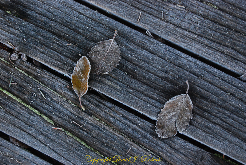 Leaves on a frosty dock