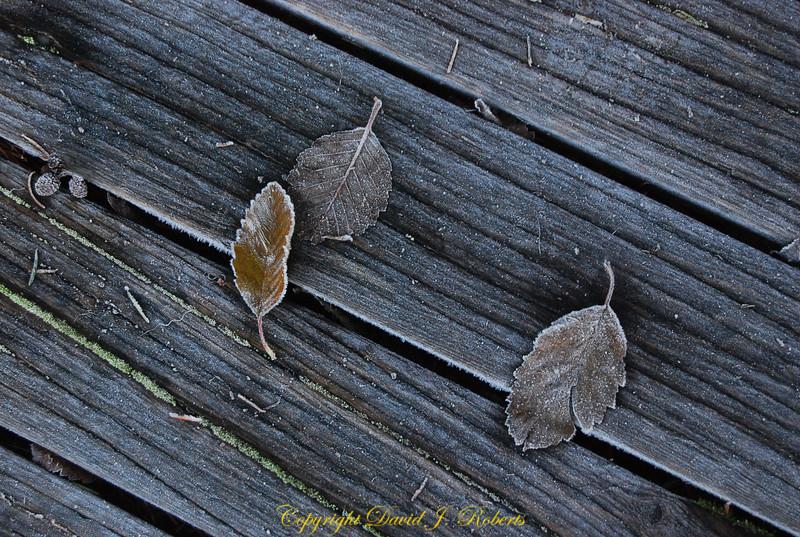 Leaves on a frosty dock