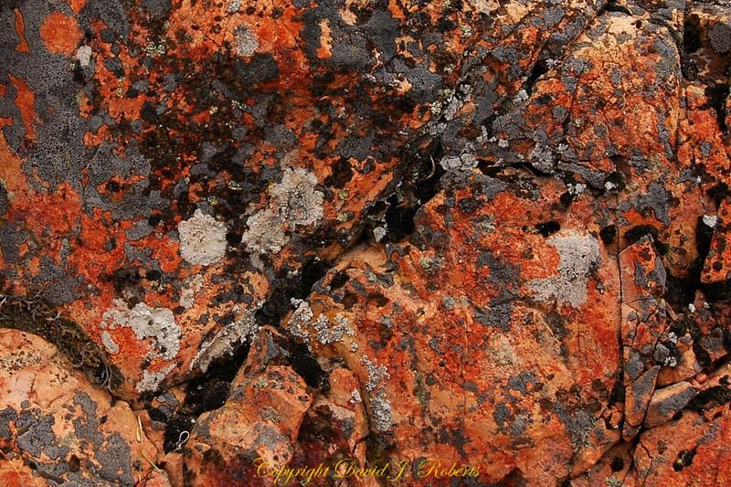 Granite with moss, Lake Chelan Washington