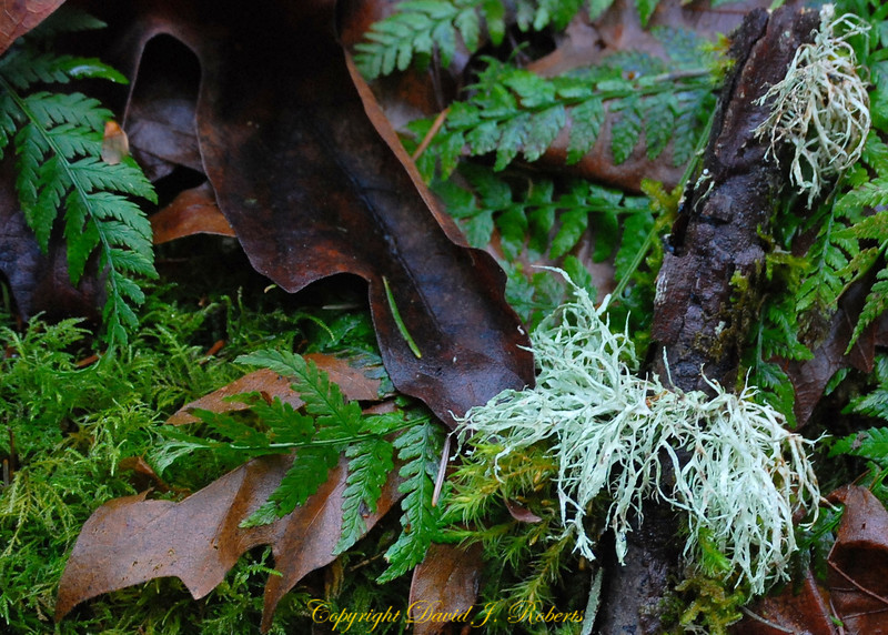 Forest floor fungus fern and leaves