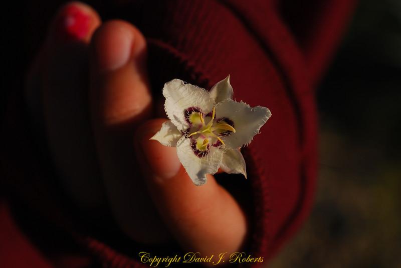 Small wildflower in Rachel's hand