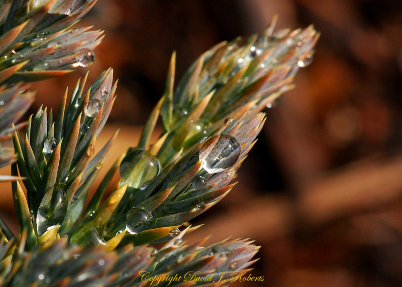 Water drops on a spikey little plant