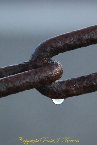 This rusty old chain hangs in the cold morning dew