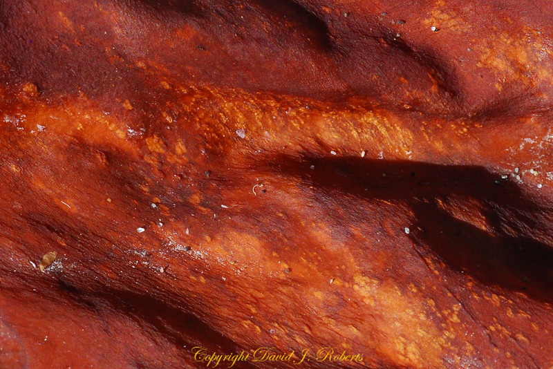 Dried kelp,  Sooke Bay BC