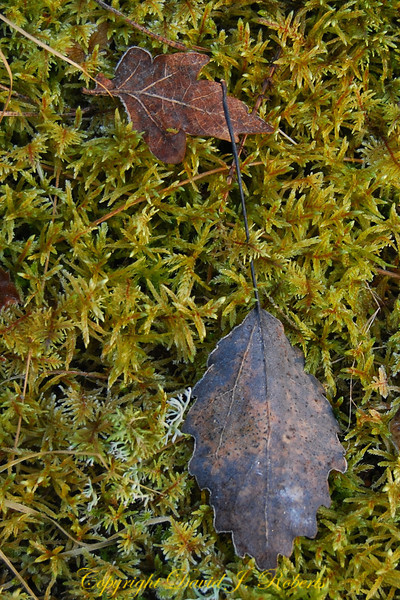 Swedish moss and leaves in winter