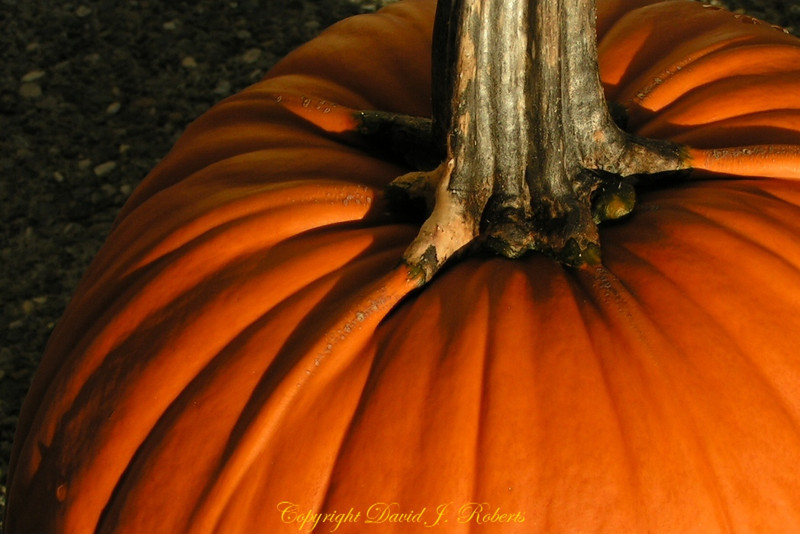 Pumpkins have that rich orange color