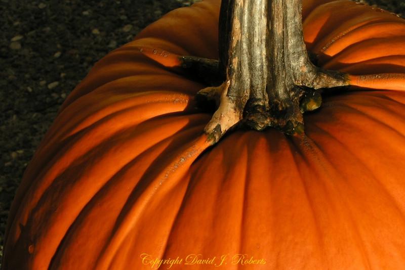 Pumpkins have that rich orange color