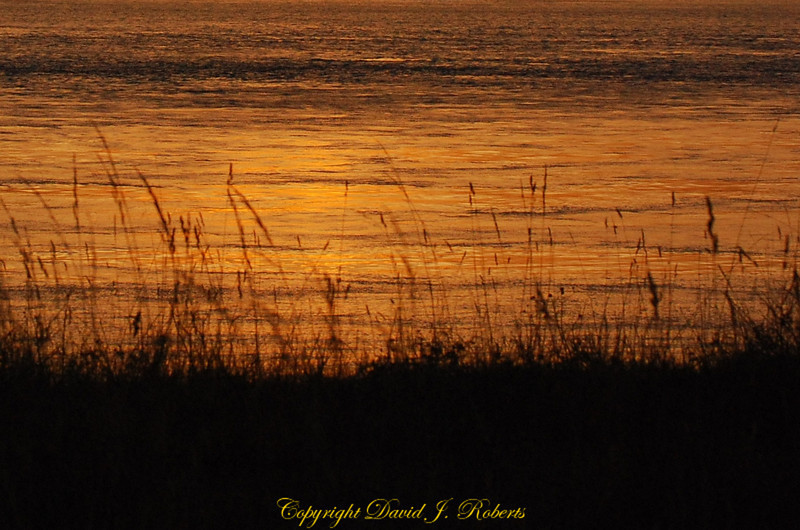 Grass along the shoreline in a golden sunset near Fort Casey, Whidbey Island, WA.