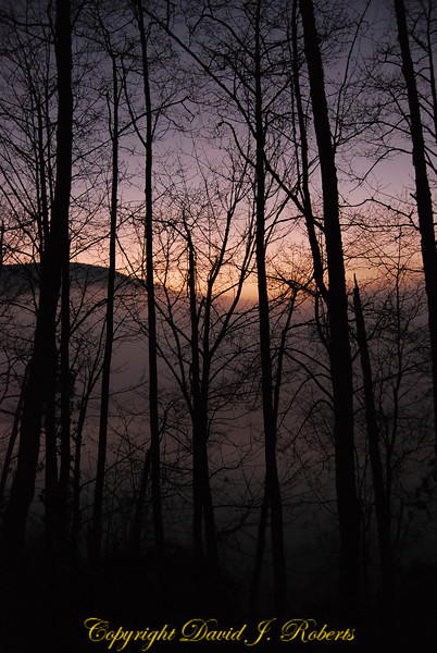 Dusk illuminates the fog and trees along Lake Samish, Bellingham WA