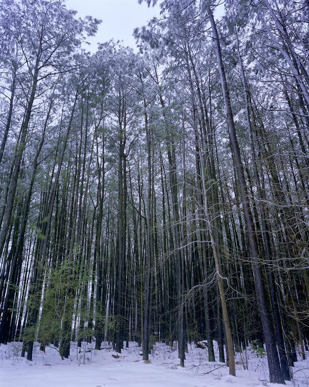 Elements-Snow