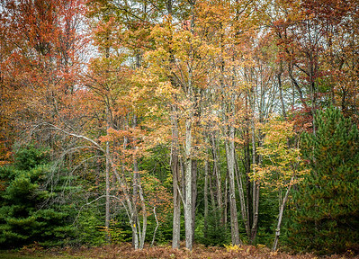 Fall color at Beaver Run along the Quehanna Highway in North Central, Pennsylvania.