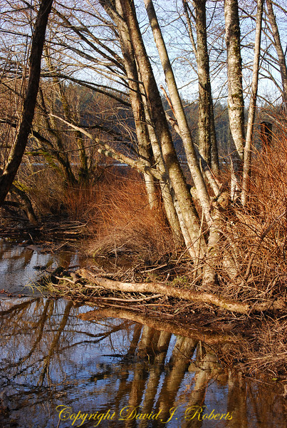 Small tributary to Lake Padden, Bellingham WA