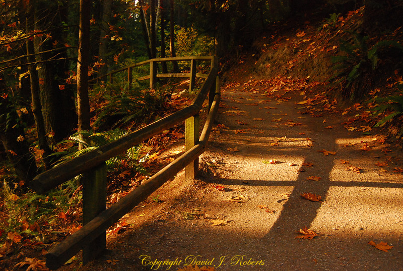 Trail in Whatcom Falls Park, Bellingham Washington