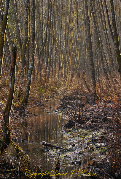 Winter stream scene along Padden Creek, Bellingham Washington