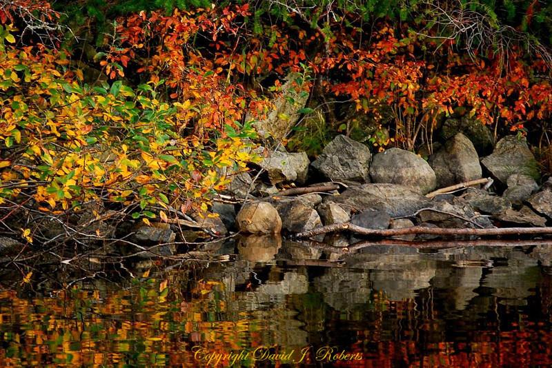 Fall reflections on Lake Padden, Bellingham WA