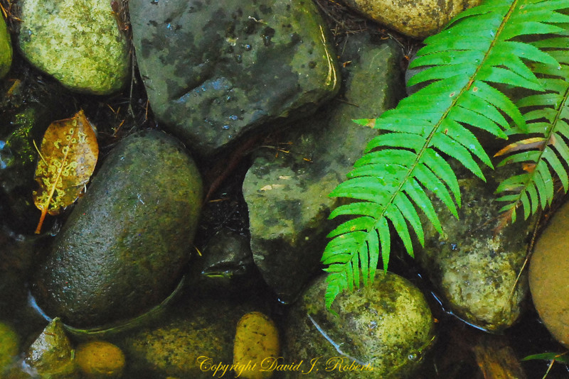 Small stream with rocks and fern
