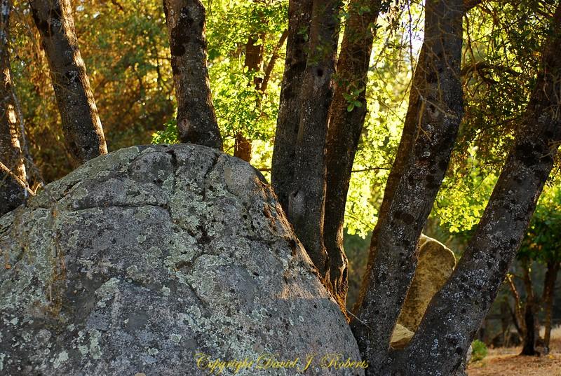 Big rock and trees at Meadow Creek Ranch Mariposa California