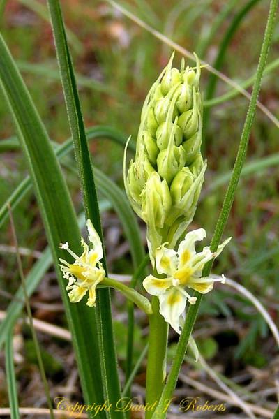 White flower WA Park crop