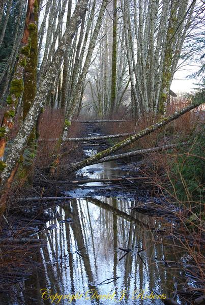Winter stream scene along Padden Creek, Bellingham Washington