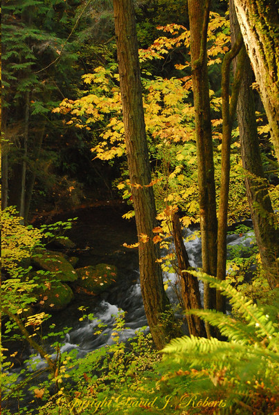 Forest and stream in Whatcom Falls Park, Bellingham Washington