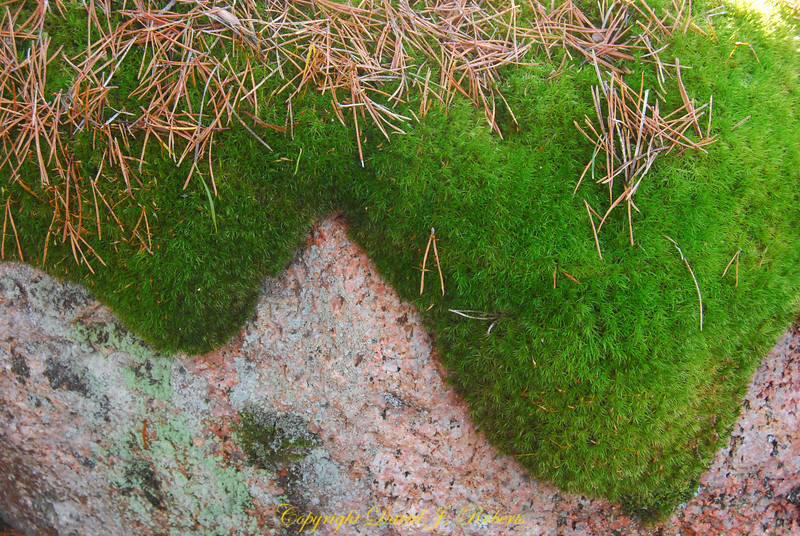 Swedish moss and needles in winter
