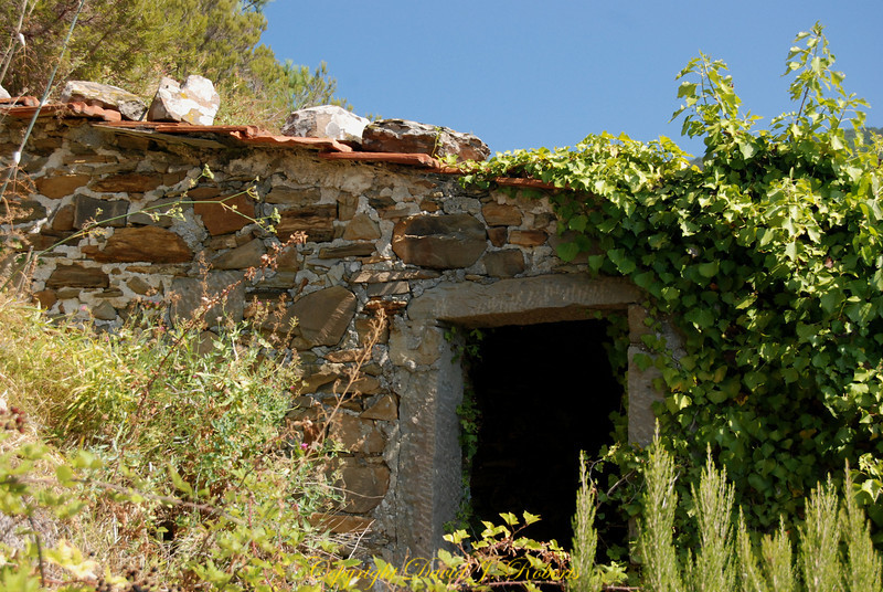 Small stone shed in the grape terraces on the mountain above Manarola, Cinque Terre, Italy