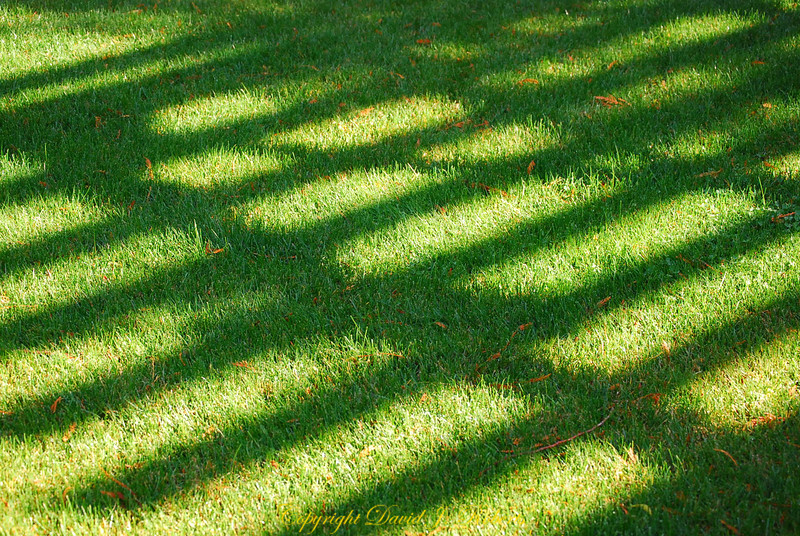 Our gate casts a beautiful pattern on the grass of our lawn