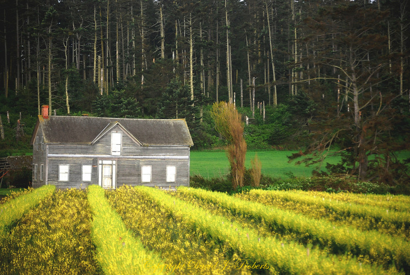 Old farm house with seed crops on Whidbey Island near Ebey's Landing.