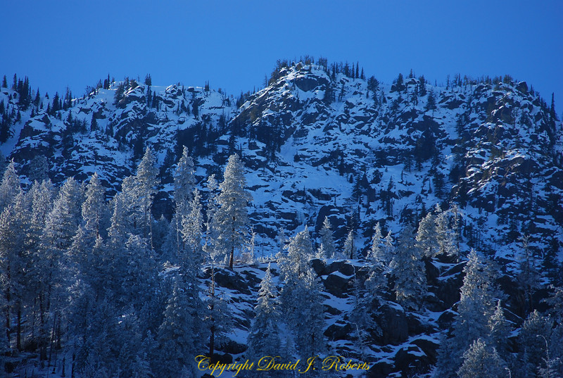 A dusting of snow on trees along Highway 2, near Stevens Pass, WA