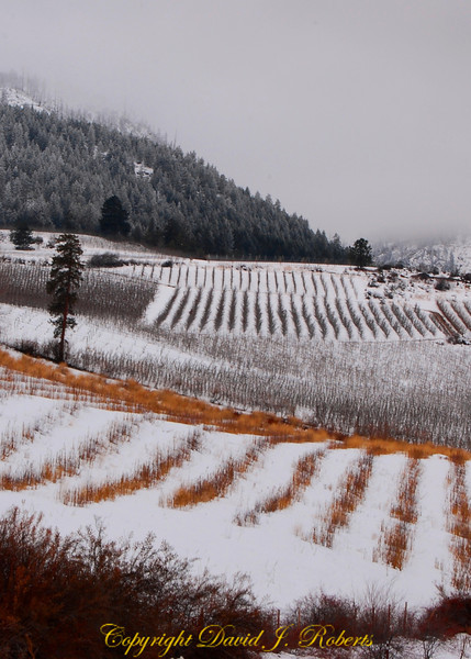 Fields with snow in Chelan County