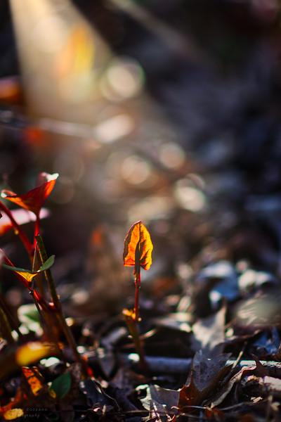 Light Upon A Leaf