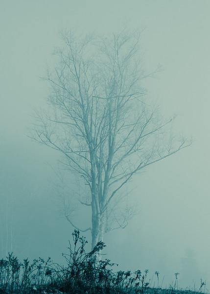 Mourning Fog