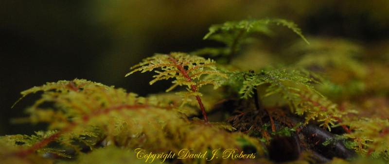 A close up look at moss on a log - panorama