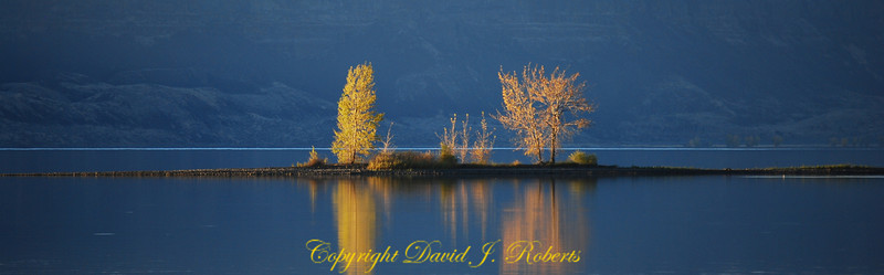 Trees on a small island in Banks Lake Washington