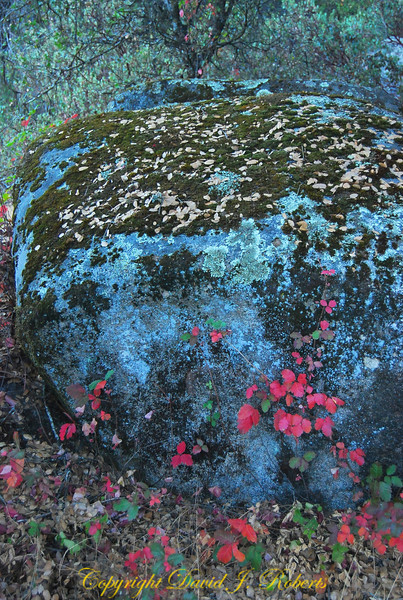 Rock with moss and pink leaves, Meadow Creek Ranch, Mariposa, California