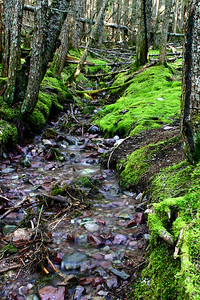 Mossy stream - Smoky Mountains National Park, Tennessee