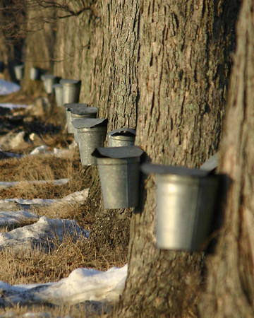 Spring and Maple Sugaring