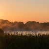 Sun Kissed Maize and Mist