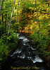 Whatcom Creek, Bellingham WA
