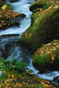 Whatcom Creek winds its way through the boulders, Bellingham WA